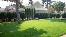 Arborvitae hedge in Minneapolis